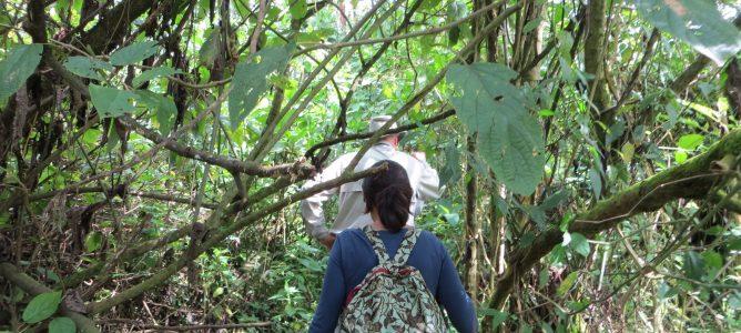 Gorillavandring