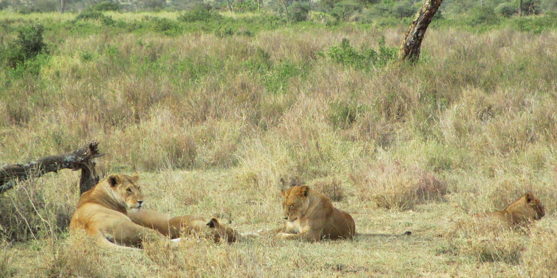 Safari Tanzania bild från Ulf på Andersons